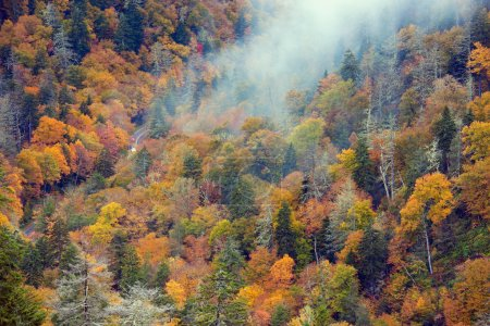 Photo for Cars driving through Smoky Mountains - the road seen from above through the colorful trees. - Royalty Free Image