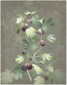 Detailed image of a bunch of figs on a tree Figs in a fig tree