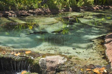 Sharks in Atlantis, Paradise Island, Nassau, Bahamas