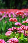 Barevný květ