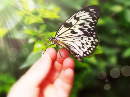 Photo for Butterfly sitting on a children's hand - Royalty Free Image