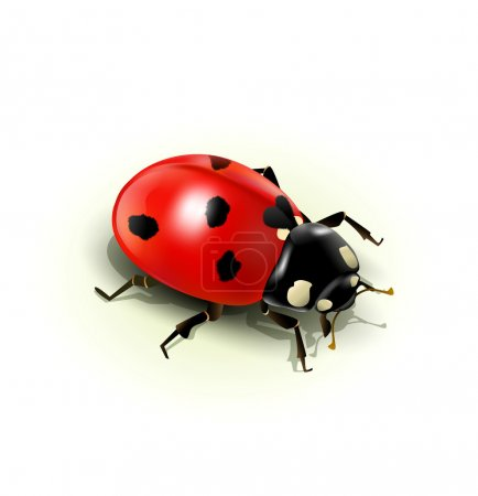 Vector ladybug, isolated on white background
