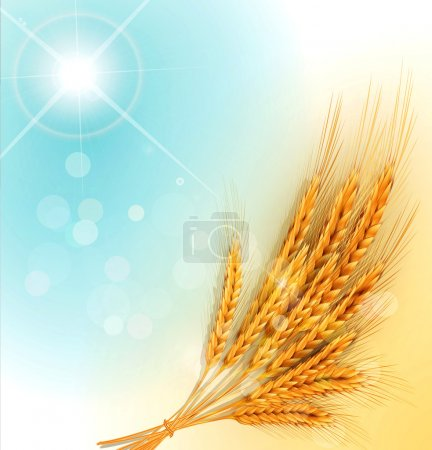 Illustration for Vector background with gold ears of wheat and sun rays - Royalty Free Image