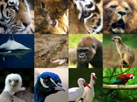 Photo pour Collage d'animaux sauvages - image libre de droit