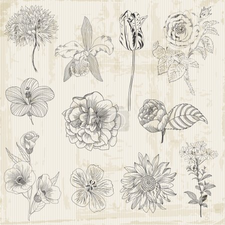 Beautiful Floral Elements - hand drawn Retro Flowers, Leaves