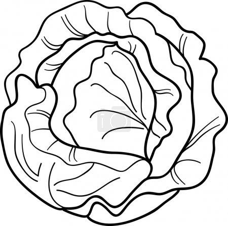 cabbage vegetable cartoon for coloring book