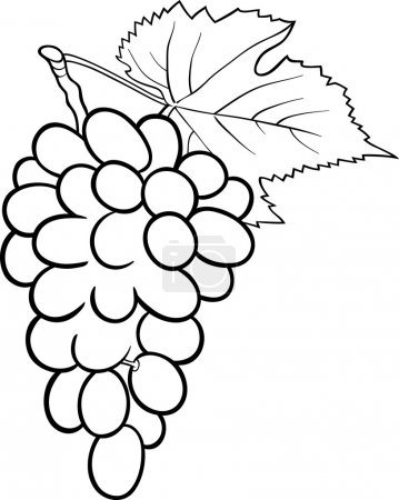 grapes illustration for coloring book