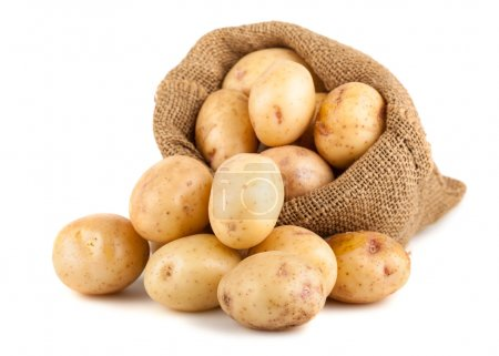 Ripe potatoes in a burlap bag