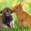 Rabbits kiss each other...