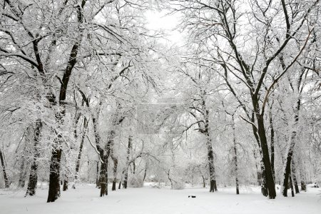 Trees with snow in winter park