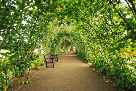 Green alley in the garden