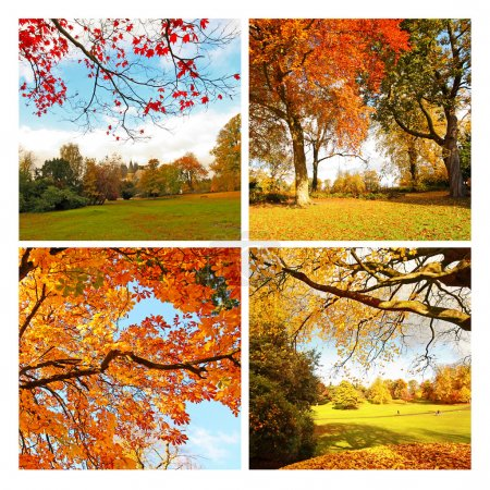 Beautiful, sunny autumn in the park, collage
