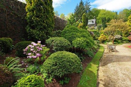 Photo pour Buxaceae, Beau jardin printanier avec buxus - image libre de droit