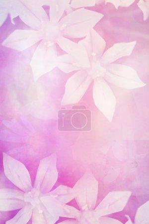 Pretty white flowers artistic background