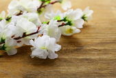 Flowering sakura tree branches (artificial) on a wooden background