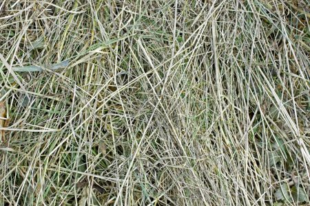 Semidry hay as a texture