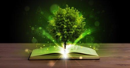 Photo pour Livre ouvert avec arbre vert magique et rayons de lumière sur le pont en bois - image libre de droit