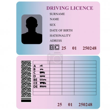 Driving license. Vector illustration....