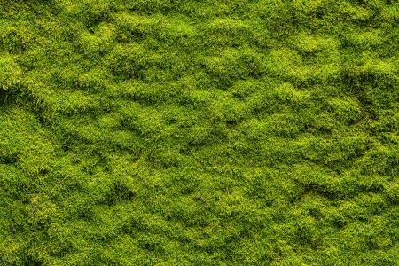 Photo pour Texture mousse, fond avec espace de copie - image libre de droit