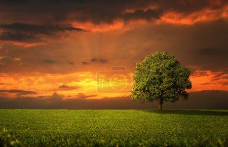 Photo pour Arbre solitaire sur le champ vide au coucher du soleil - image libre de droit