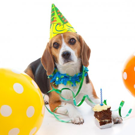 pet first birthday party celebration