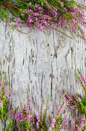 Photo for Heather on the old wood background - Royalty Free Image