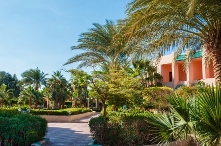 Beautiful park with palms in a five star hotel. Hurghada, Egypt.