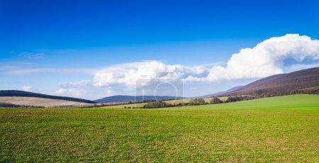 Photo pour Champ vert et ciel bleu - image libre de droit