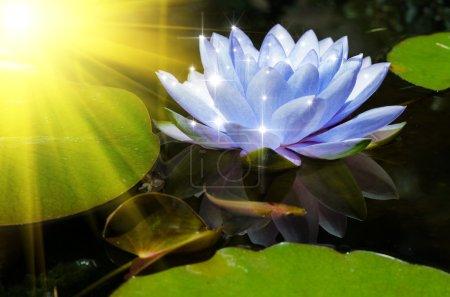 Photo pour Fond de fleur de lotus - image libre de droit