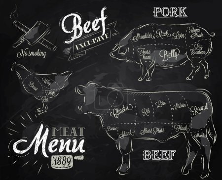 Illustration for Chalk Illustration of a vintage graphic element on the menu for meat steak cow pig chicken divided into pieces of meat - Royalty Free Image