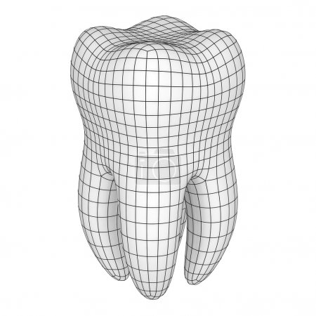 Mesh of tooth