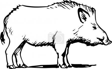 Illustration pour Sanglier debout sur fond blanc - image libre de droit