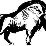 Bison standing on white background...