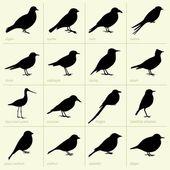 Birds(part1)