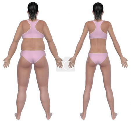 Photo for Before and after rear view illustration of a overweight female and a healthy weight female after dieting and exercising. Isolated on a solid white background. - Royalty Free Image
