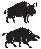 Wild boar black and white