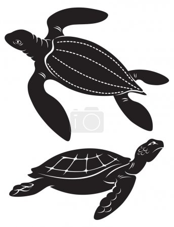 The figure shows the turtle