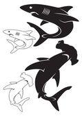 illustration of  white and black sharks