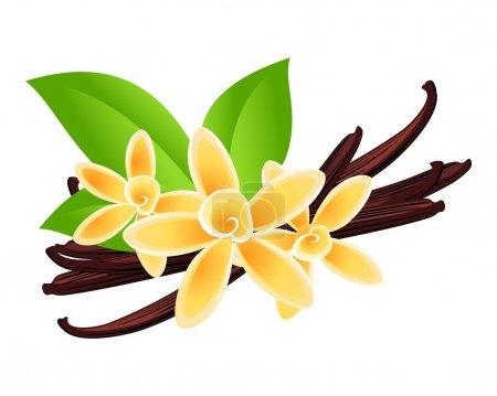 Illustration pour Fleurs de vanille. Fond floral vectoriel . - image libre de droit