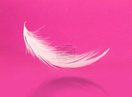 Photo pour Plume blanche volante avec ombre sur fond rose - image libre de droit
