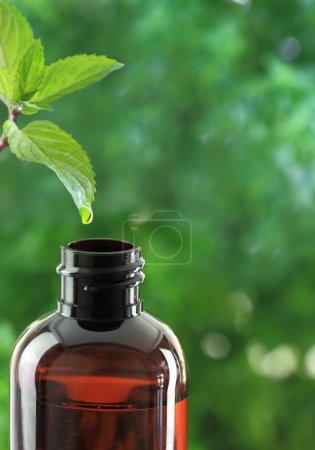 Photo pour Laisser tomber la chute des feuilles de menthe dans une bouteille d'huile essentielle - image libre de droit