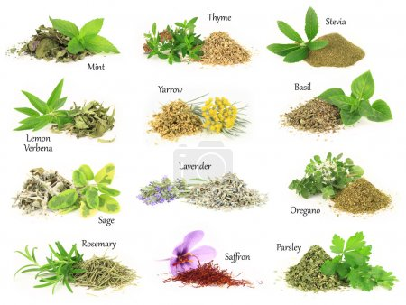 Photo for Collection of fresh and dry aromatic herbs - Royalty Free Image