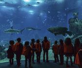 Lisbon Oceanarium. School children look at tropical fish