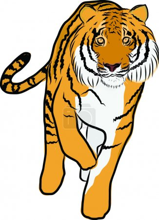 Hand drawn tiger vector
