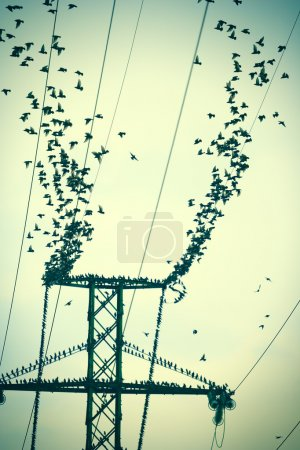 Birds on a power wires flying together