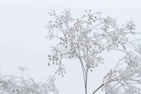 Foto de Escena de invierno - Imagen libre de derechos