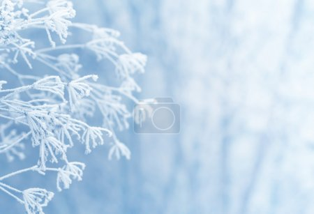 Photo for Winter scene - Royalty Free Image