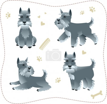 Set of schnauzer pupies