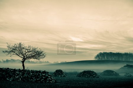 Photo for Magical morning mist foliage on a beautiful countryside scenery landscape - Royalty Free Image