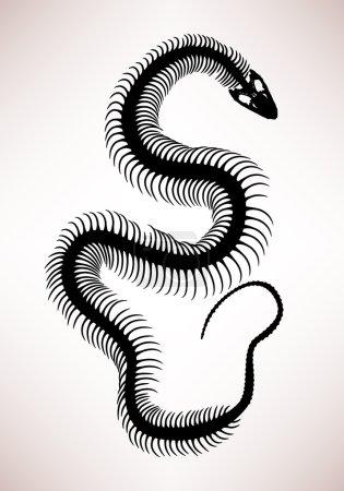 Snake Bone Skeleton